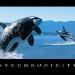 Expect synchronicity
