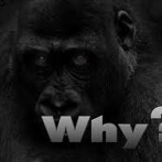 Keep Asking 'Why?'